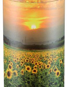 Sunflower - Extra Large